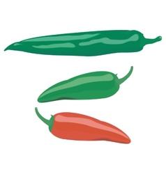 Peppers vector