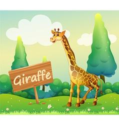 A wooden signboard beside a giraffe vector image vector image