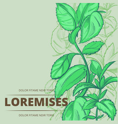 Peppermint plants and leaves poster background vector