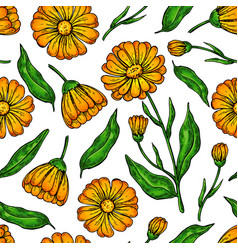 calendula seamless pattern isolated medical vector image vector image