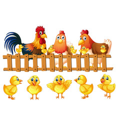 Chicken family with five little chicks vector