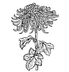Chrysanthemum flower black vector