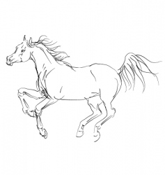 horse Arab vector image vector image