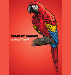 Scarlet macaw parrot vector
