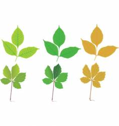seasonal leaves vector image