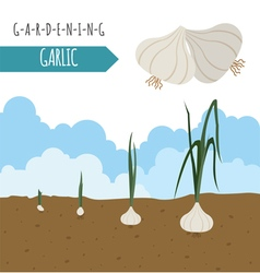 Gardening work farming garlic graphic template vector
