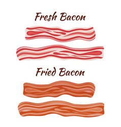 Fresh and fried bacon cartoon flat style vector