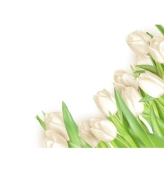 Tulips decorative background eps 10 vector