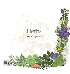 collection of herbs and spices for you design vector image