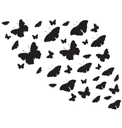 Butterfies flying around vector image