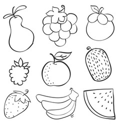 collection stock of fruit various doodles vector image vector image