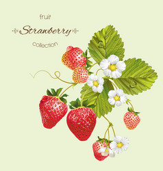 Realistic of strawberry vector