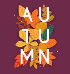 autumn autumn leafs on the background flat vector image