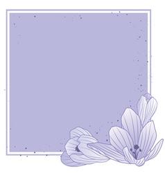 crocuses vector image vector image