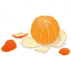 Peeled orange vector