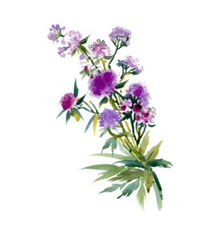 Summer purple watercolor flowers on white vector