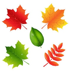 Collection Of Leaves vector image vector image