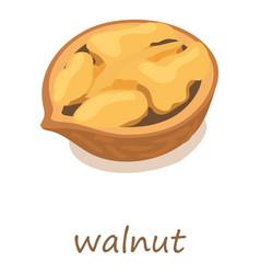 walnut icon isometric 3d style vector image