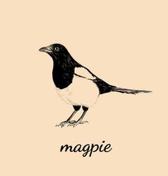 Magpie sketch bird magpie vector