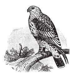 Rough legged buzzard vintage vector