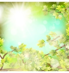 Season branches with fresh green leaves eps 10 vector