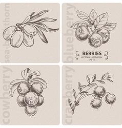 Set of berries vector image vector image