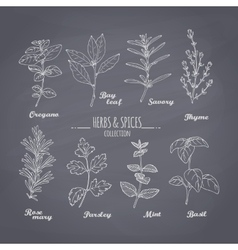 Set of hand drawn spicy herbs on chalkboard vector
