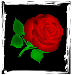 Abstract black and red rose vector