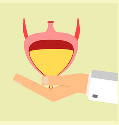 doctors hand hold human bladder health care vector image