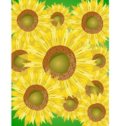 sunflower bed vector image