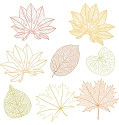 Set of different leaves a vector