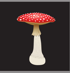 Fly agaric mushroom isolated on black background vector
