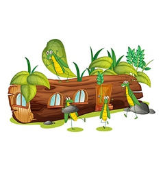 Grasshoppers vector image vector image