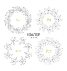 Spicy herb circle frames collection hand drawn vector