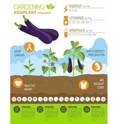 Gardening work farming infographic eggplant vector