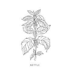 Nettle hand drawn realistic sketch vector