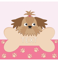 Little glamour tan shih tzu dogs head and big bone vector