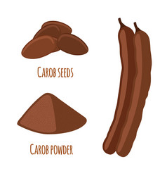 carob pods beans powder superfood vegetarian vector image vector image