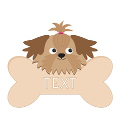 Glamour shih tzu dogs head and big bone isolated vector