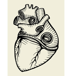human heart sketch vector image