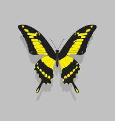 large butterfly with black wings yellow patterns vector image vector image