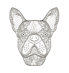 Bulldog head coloring book for adults vector