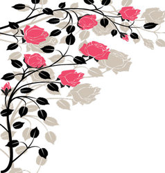 Flourishes-in-black-and-pink vector image vector image