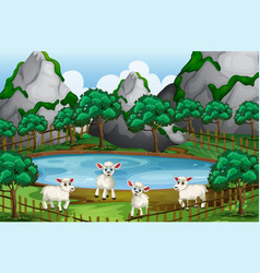 Four sheeps by the pond vector