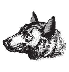 Head of roussette bat vintage vector