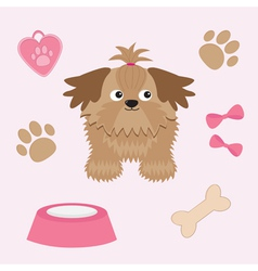 Little glamour tan shih tzu and dog stuff vector