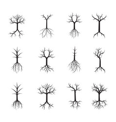 set naked black trees and roots vector image