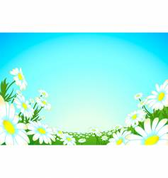summer chamomile meadow vector image