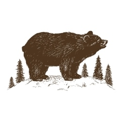 Brown bear symbol vector