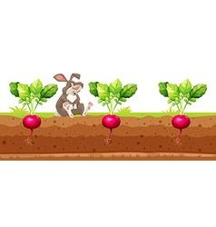 Rabbit sitting in the red radish garden vector image vector image